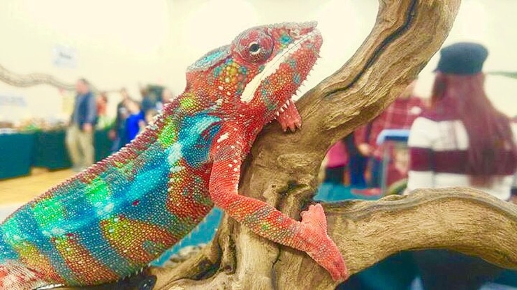 Crosstown Exotics: Traveling Reptile & Bug Show – Hands on